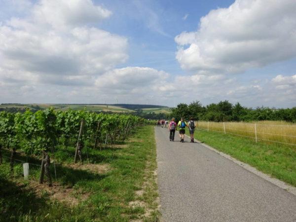 Weinwanderung Dettelbach
