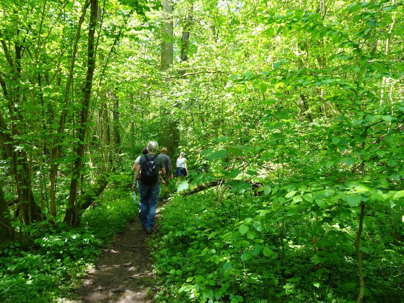 Sulzfeld Wald