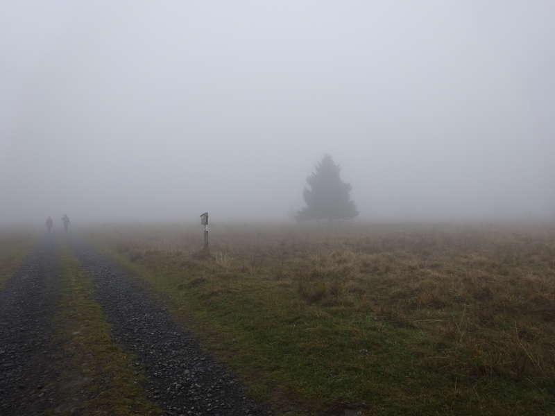Single Frauen im Nebel
