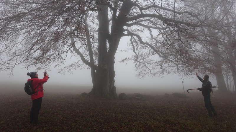 Singlewanderung Rhön – 17 km im Nebel auf der Rhön