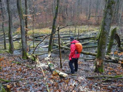 Singles entdecken Bieber im Steigerwald