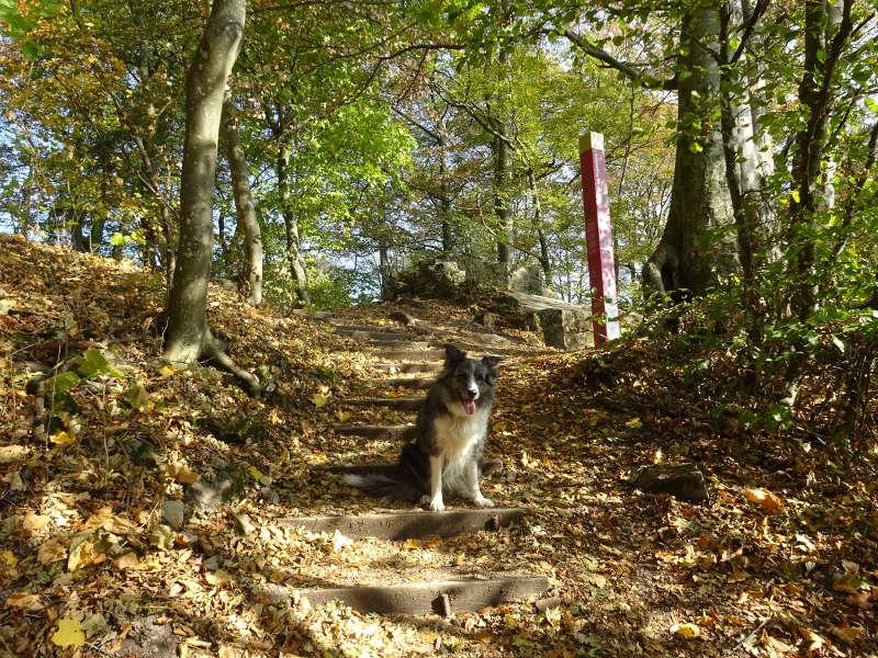 Merle im Steigerwald