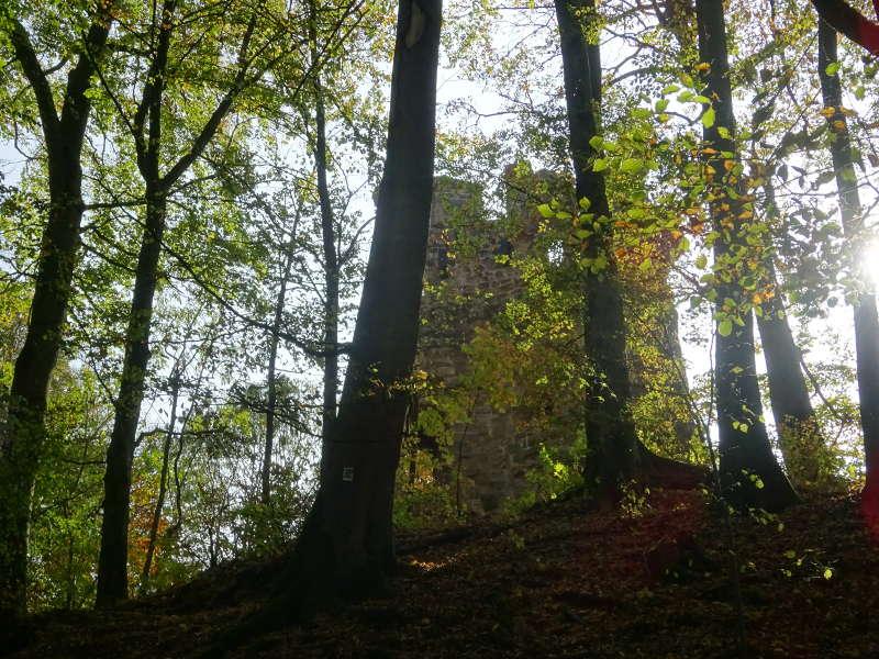 Ruine Stollburg im Wald