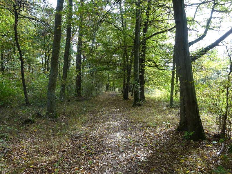 Singlewanderung Traumrunde Sulzfeld