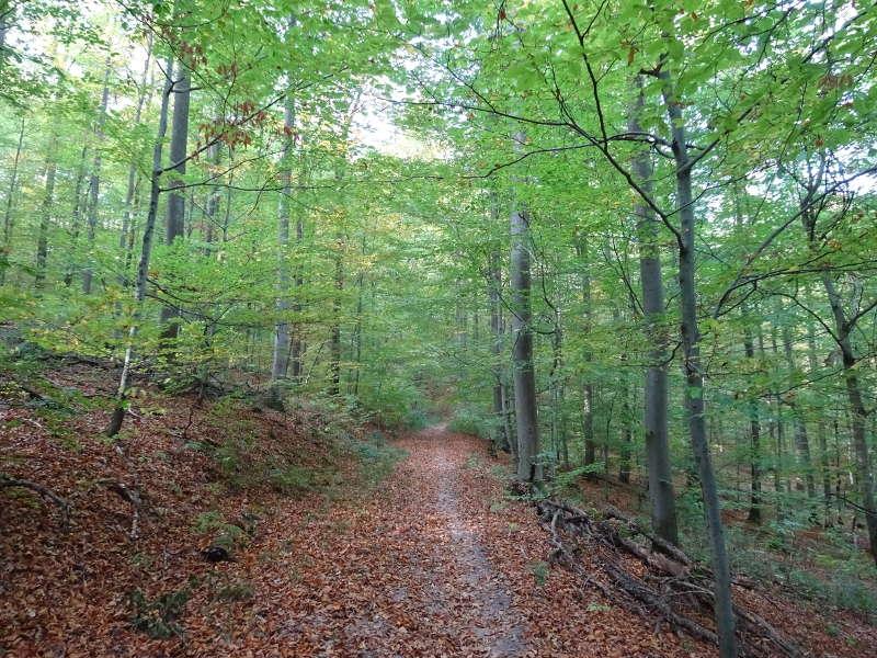 Waldweg Keltenweg um Handthal