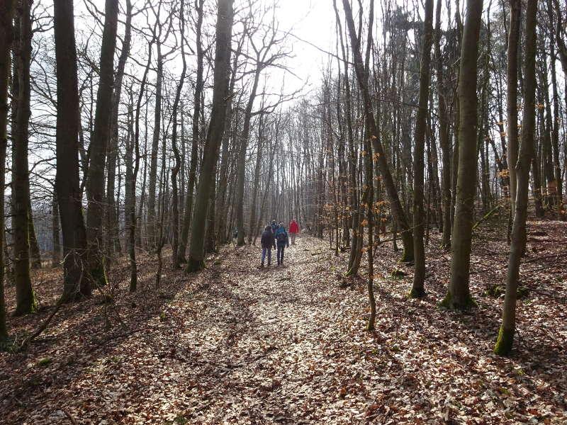 Buchenwald Single Wanderung Iphofen Birklingen