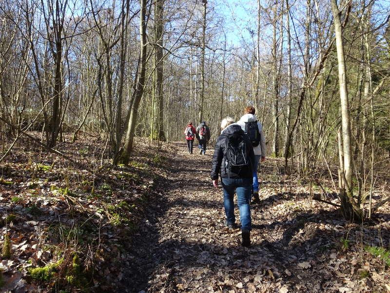 Singles wandern im Buchenwald bei Sulzfeld Traumrunde