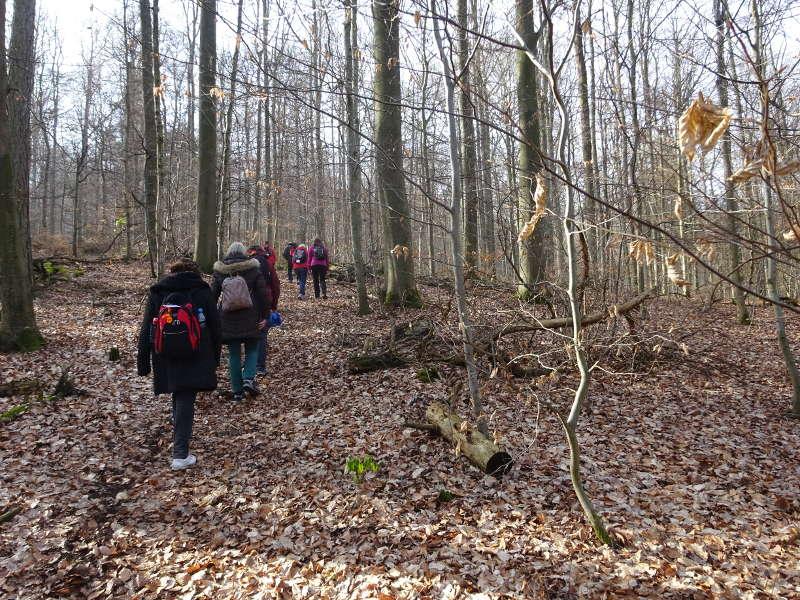 Buchenwald Wanderweg Steigerwald Handthal
