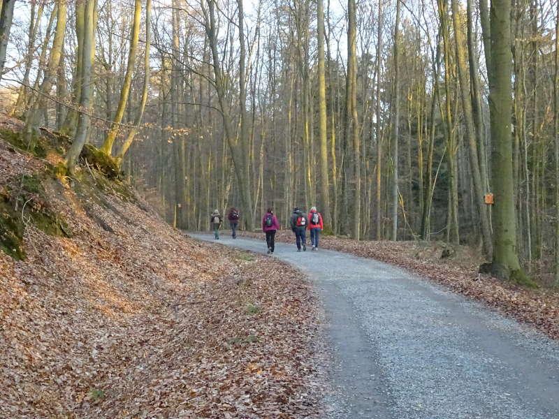 Buchenwald Steigerwald Laubwald Singles