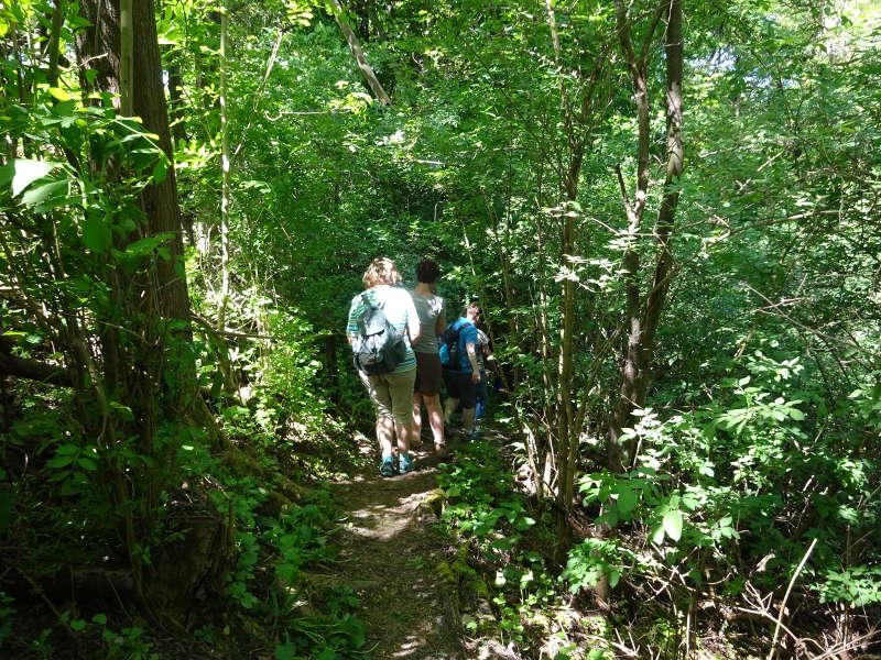 Singles wandern im Dschungel Mainschleife