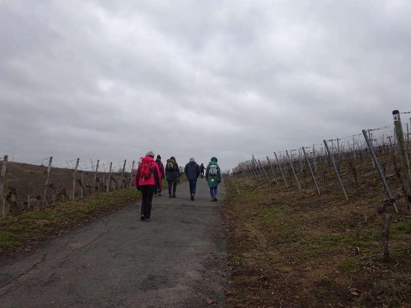 Escherndorf nahe Vogelsburg Wanderung zur Fähre nach Fahr Volkach