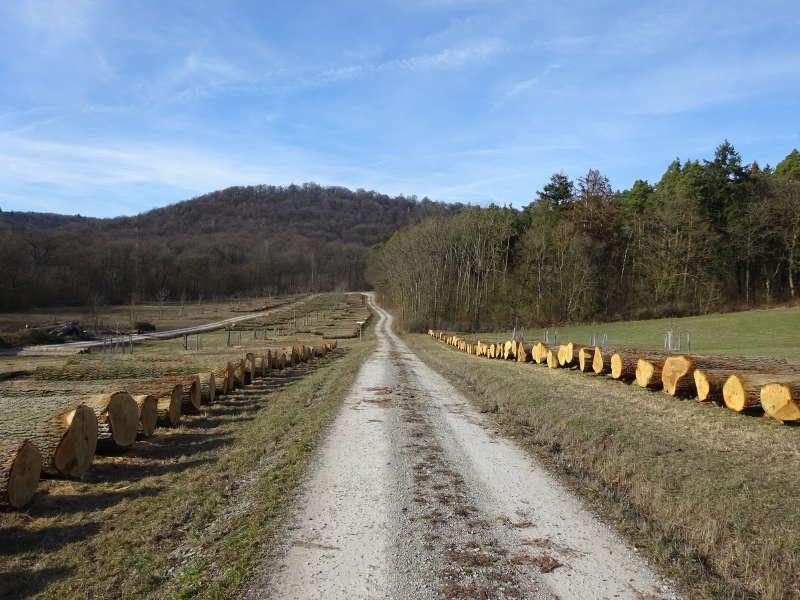 Holzwirtschaft im Forst Mittelwald auf Traumrunde Iphofen Birklingen