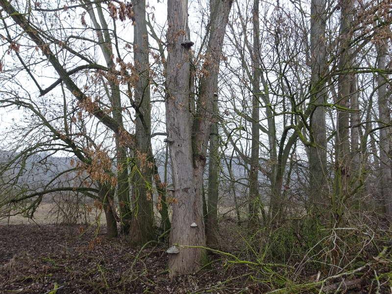 Pilze am Main auf Single Wanderung Weininsel
