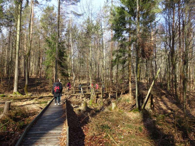 Singlewanderung im Steigerwald Handthal