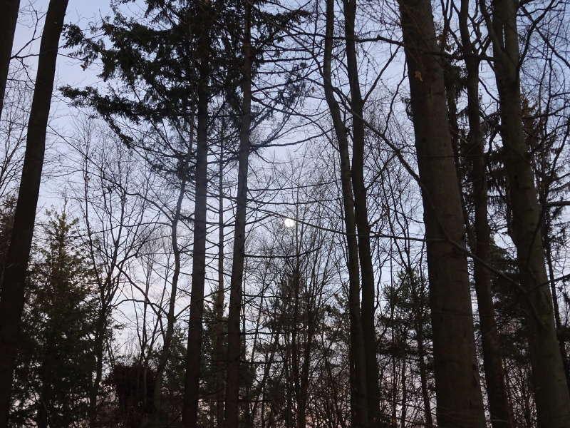 Vollmond Singlewanderung Steigerwald Ruine Stollburg Handthal