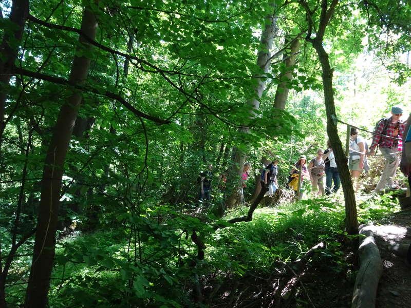 Singlewanderung Dschungel Volkach