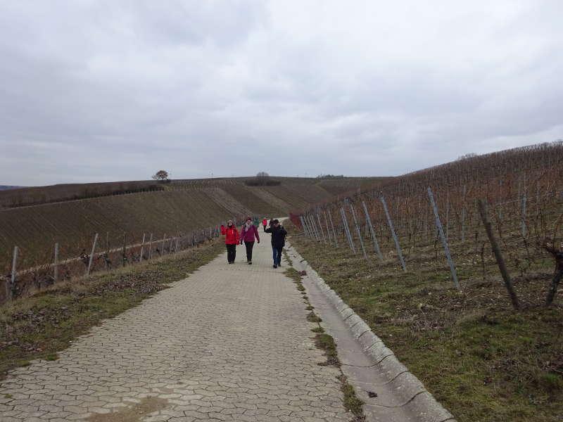 Wein Wanderweg nach Volkach