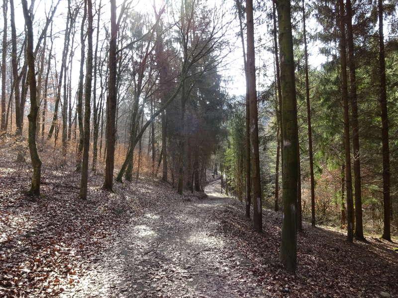 Waldwanderweg für Singles gemeinsam Mühlentour Schweinfurt Schonungen