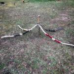 Ausrüstung beim Bogenschießen für Single Outdoor Events Dettelbach Würzburg Unterfranken Bayern Pfeil und Bogen Zielscheibe 3-D