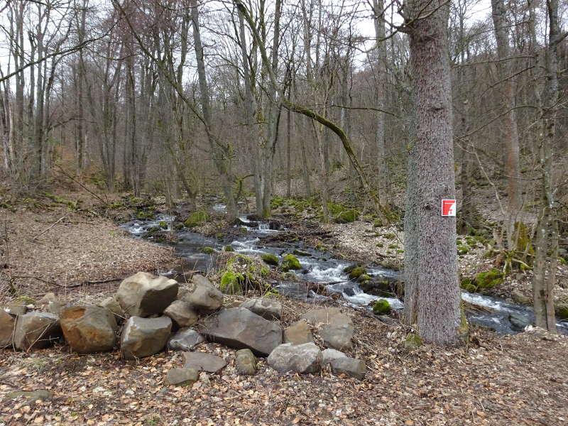 Elsbach Oberelsbach Rhöniversum Biosphärenreservat Singlewanderung Unterfranken Bayern