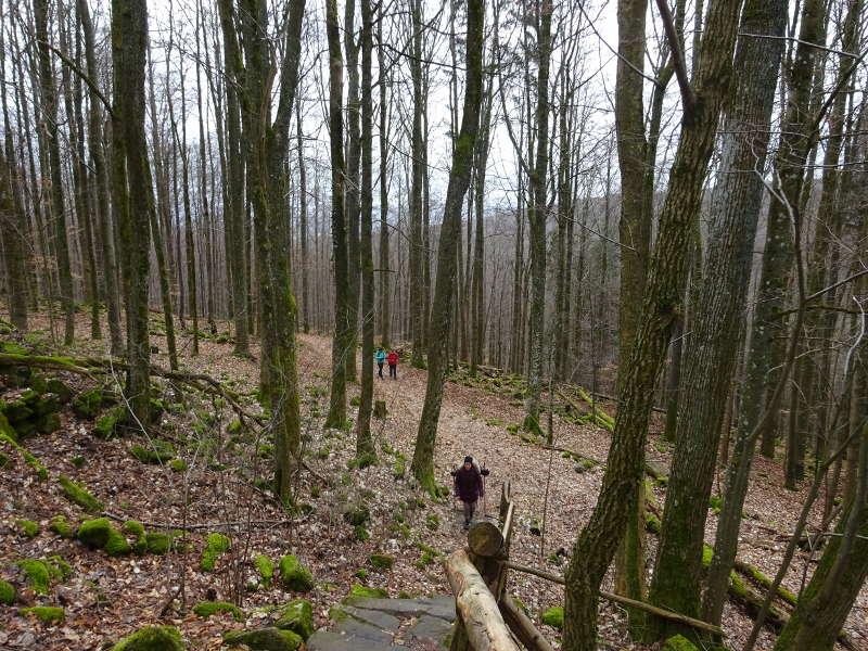 Wanderweg zur Prismenwand am Gangolfsberg in der bayerischen Rhön Singlewandern Outdoor