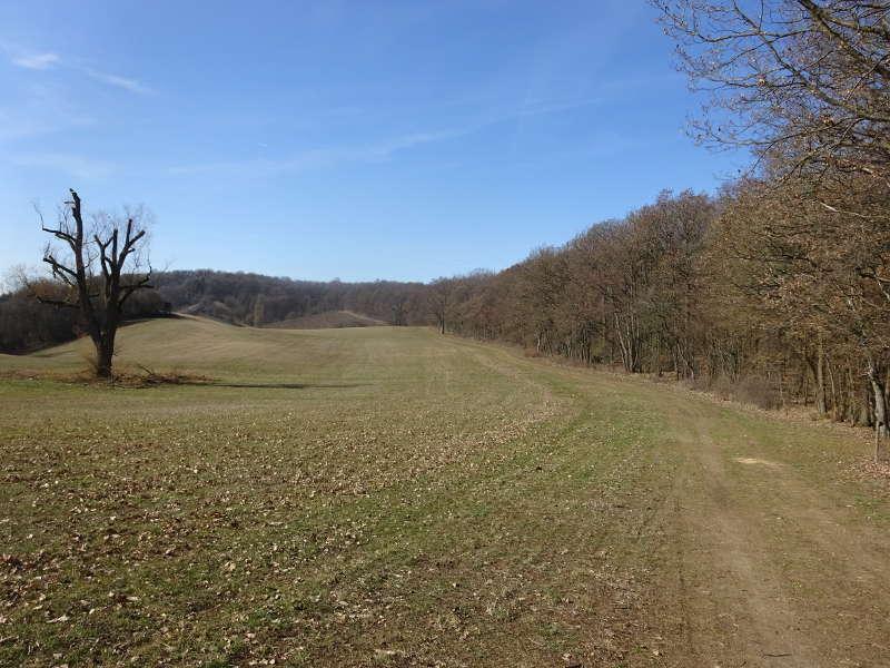 Baum auf Wanderweg von Iphofen zur Ruine Speckfeld nach Birklingen Am See Singles gemeinsam Outdoor Bayern