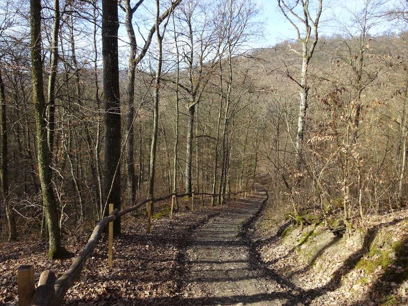 Bergab im Wald nach Iphofen im Mittelwald Steigerwald Singlewanderung Outdoor Bayern