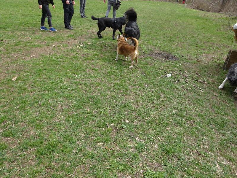 Hunde auf Singles Wandern in Unterfranken Ruine Speckfeld Bayern Outdoor Event mit Aktivitäten