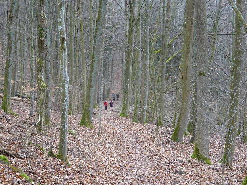 Laubwald Buchenwald Biosphärenreservat Kernzone Unterfranken Single Wanderung
