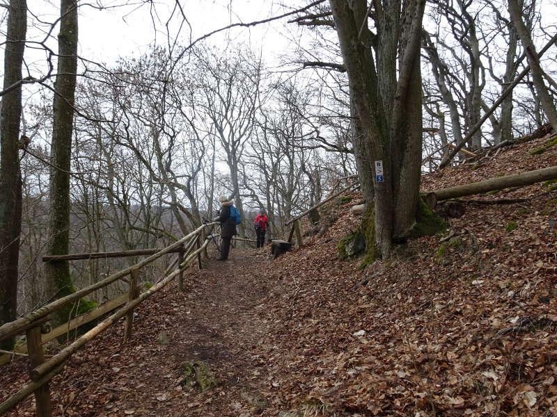 Wanderung Linde Gangolfsberg Oberelsbach Umwelt Naturschutz Singles Wandern Bayern Unterfranken Biosphärenreservat Kernzone