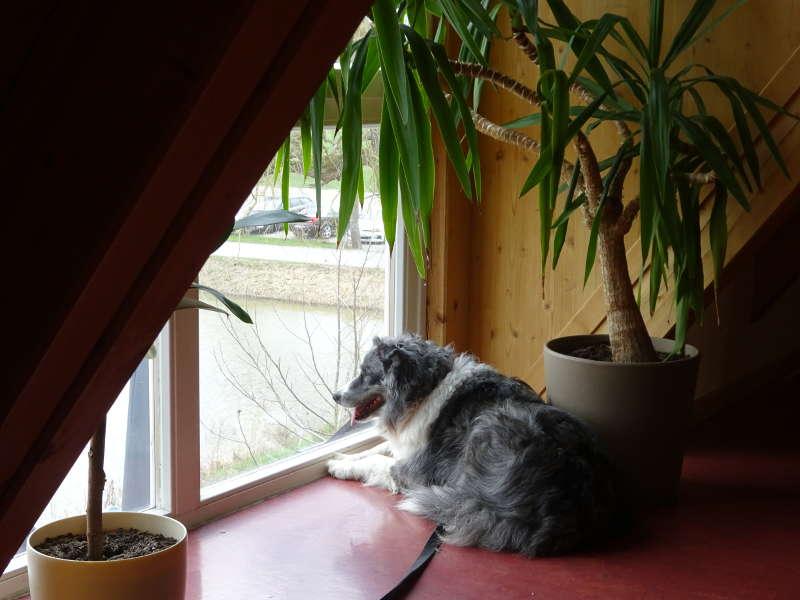 Merle genießt die Aussicht in Birlingen auf den See Mittagspause auf Wanderung