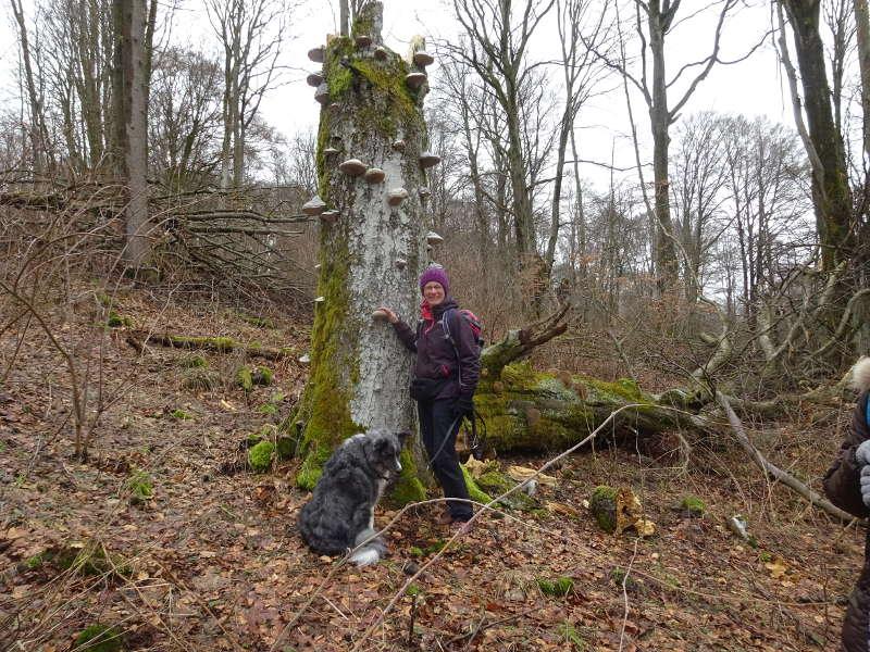 totholz Buche Kernzone Gangolfsberg Thüringer Hütte Sonja Heinemann Hund Merle Wanderführer Naturschutz Umweltbildung
