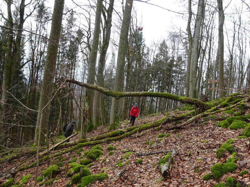 Querfeldein Gangolfsberg Totholz Single Wandern Prismenwand Buchenwald Kernzone