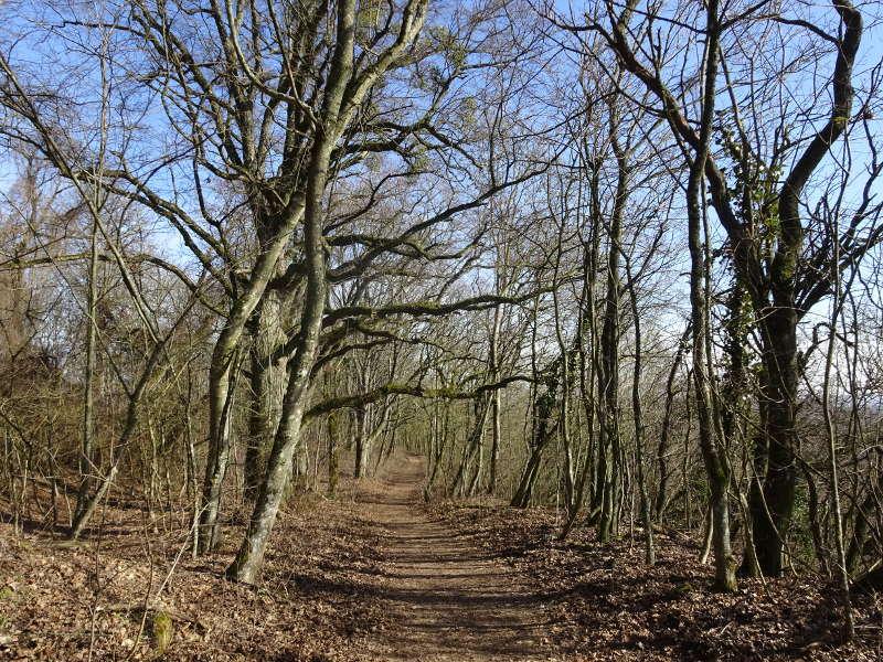 Waldwege im Bärlauchwald auf Traumrunde Iphofen bei Birklingen am See in Unterfranken Singlewanderung