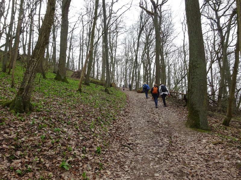 Schlossberg Ruine Speckfeld in Iphofen am Schwanberg Singles Wandern gemeinsam nach Birklingen