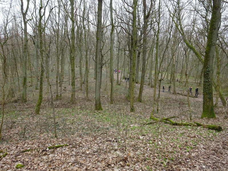 Singlewandern im Bärlauchwald Steigerwald Mittelwald Iphofen Schwanberg Unterfranken in Bayern Singles gemeinsam unterwegs Augustiner Am See