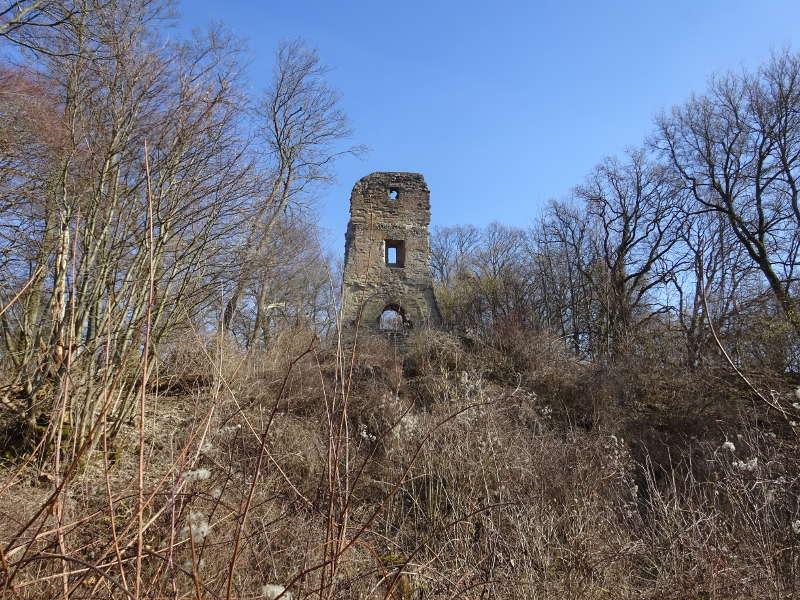Ruine Speckfeld im Mittelwald Bärlauch Markt Einersheim Bullenberg Weinberge Unterfranken Singlewanderung