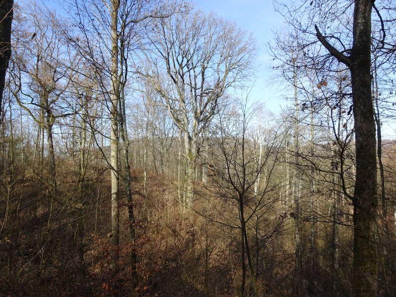 Mittelwald Bäume Bärlauch Wandern Singles unterwegs Traumrunde Iphofen