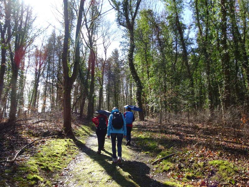 Wandern durch Laubwald in Würzburg zur Frankenwarte auf dem Nikolausberg Singles unterwegs per Rucksack im März in Bayern
