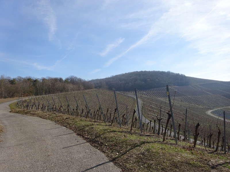 Richtung Schlossberg zur Ruine Speckfeld bei Markt Einersheim am Bullenberg im Steigerwald Unterfranken Iphofen terrior f