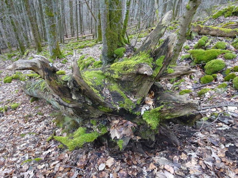 Totholze Rhön Unterfranken Wanderung Gangolfsberg Singles Outdoor Aktivität