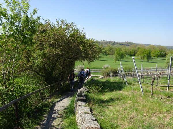 Wanderung Maria im Weingarten Bayern Volkach Main