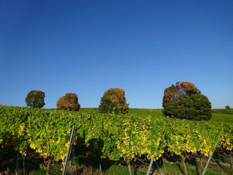 Wanderung Weininsel