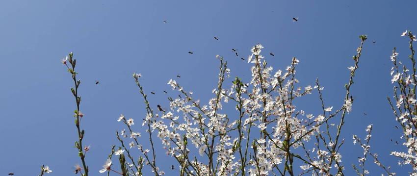 Bienenführung – Honigernte