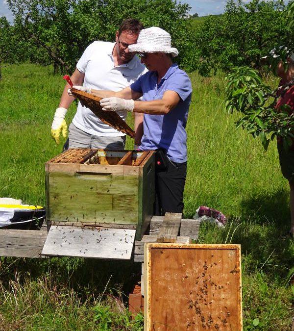 Bienenführung auf der Weininsel – Nordheim Mainschleife
